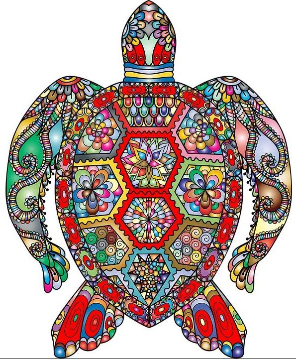 turtle_jpeg.jpg